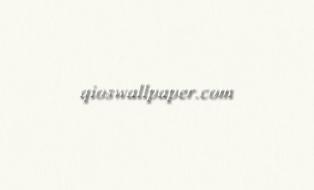 wallpaper dinding polos terbaru